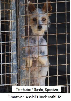Chihuahua In Not Helfen Sie Einem Chihuahua Im Tierheim